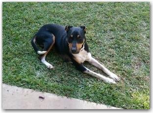 affinity-dog-training-and-behaviour-modification_monroe