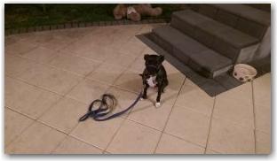 affinity-dog-training-sydney-sunny1