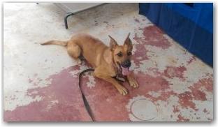 affinity-dog-training-sydney_harlie