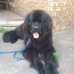 Duke is like a brand new dog